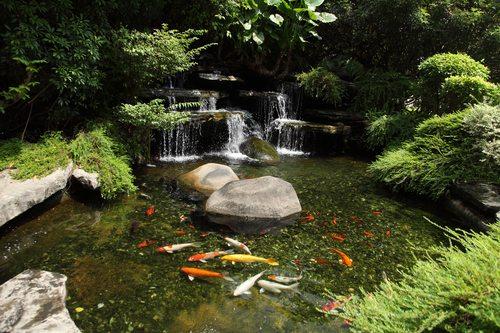 בריכת דגים לגינה