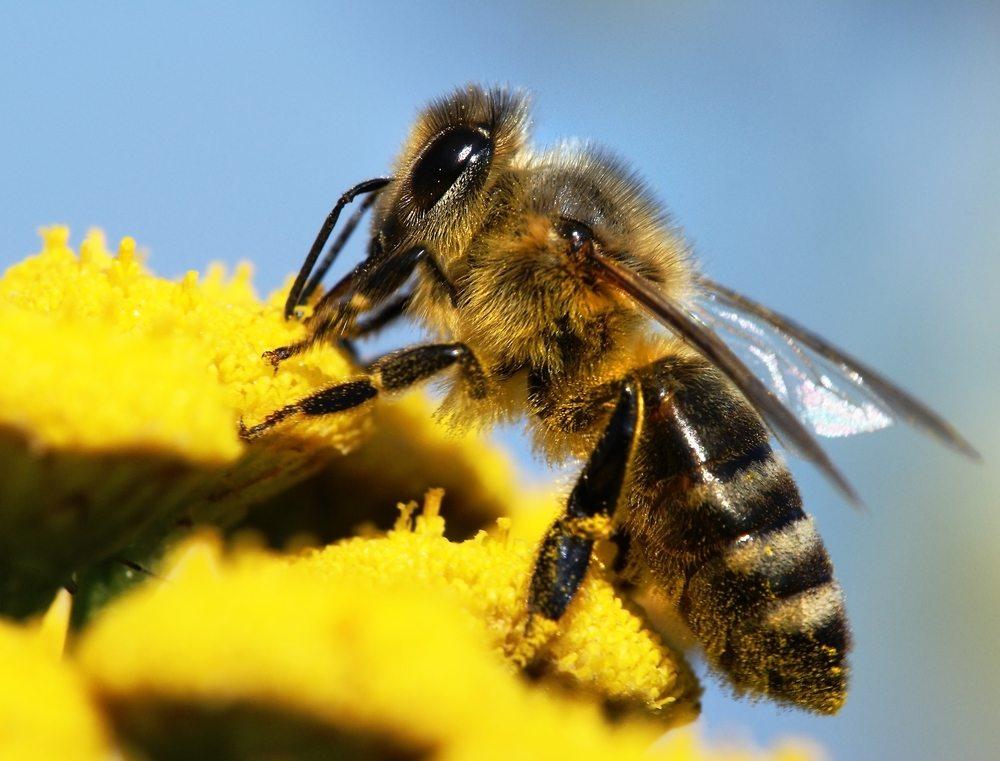הרחקת דבורים